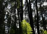 Wald von Broceliande