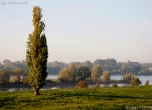 Rheinaue bei Dinslaken